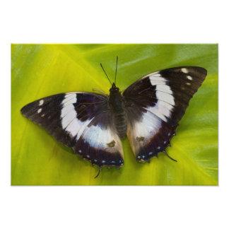 Sammamish, Washington. Tropical Butterflies 30 Photo Print