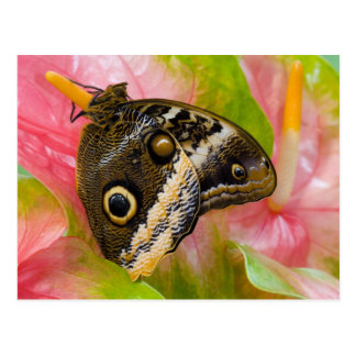 Sammamish, Washington. Tropical Butterflies 30 Postcard
