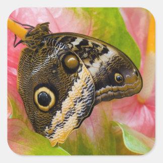 Sammamish, Washington. Tropical Butterflies 30 Stickers