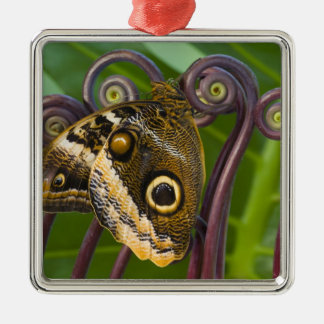 Sammamish, Washington. Tropical Butterflies 31 Christmas Ornament