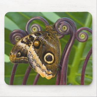 Sammamish, Washington. Tropical Butterflies 31 Mouse Mat