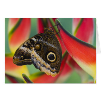 Sammamish, Washington. Tropical Butterflies 32 Card