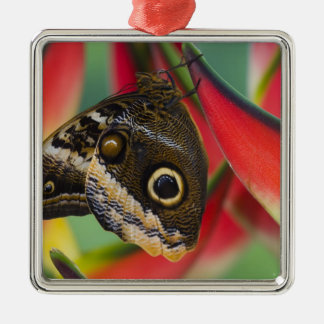 Sammamish, Washington. Tropical Butterflies 32 Christmas Ornament