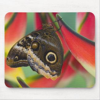 Sammamish, Washington. Tropical Butterflies 32 Mouse Mat