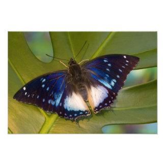 Sammamish, Washington. Tropical Butterflies 32 Photo Print