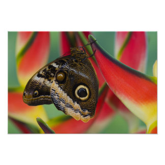 Sammamish, Washington. Tropical Butterflies 32 Poster