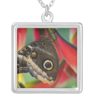 Sammamish, Washington. Tropical Butterflies 32 Square Pendant Necklace