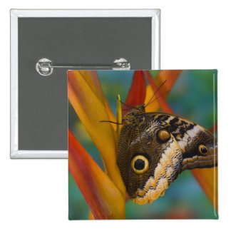 Sammamish, Washington. Tropical Butterflies 33 15 Cm Square Badge