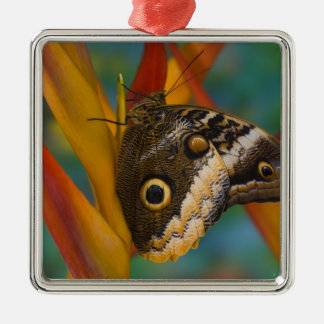 Sammamish, Washington. Tropical Butterflies 33 Christmas Ornament