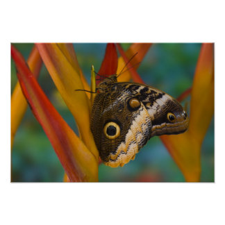 Sammamish, Washington. Tropical Butterflies 33 Poster