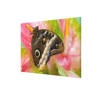 Sammamish, Washington. Tropical Butterflies 34 Canvas Print
