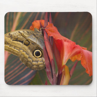 Sammamish, Washington. Tropical Butterflies 34 Mouse Mat
