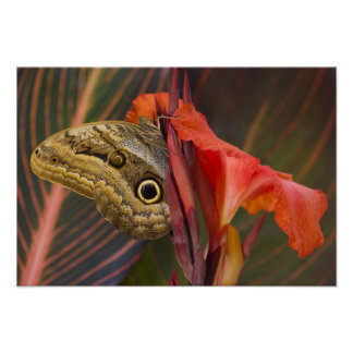 Sammamish, Washington. Tropical Butterflies 34 Poster