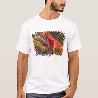 Sammamish, Washington. Tropical Butterflies 34 T-Shirt