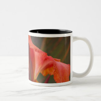 Sammamish, Washington. Tropical Butterflies 34 Two-Tone Coffee Mug