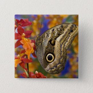 Sammamish, Washington. Tropical Butterflies 35 15 Cm Square Badge