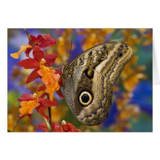 Sammamish, Washington. Tropical Butterflies 35 Card
