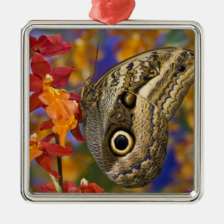 Sammamish, Washington. Tropical Butterflies 35 Christmas Ornament