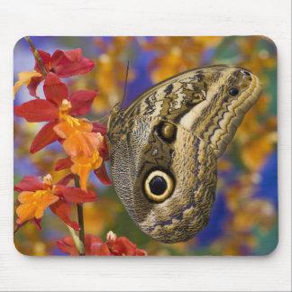 Sammamish, Washington. Tropical Butterflies 35 Mouse Mat