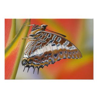 Sammamish, Washington. Tropical Butterflies 35 Photo Print