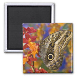Sammamish, Washington. Tropical Butterflies 35 Square Magnet