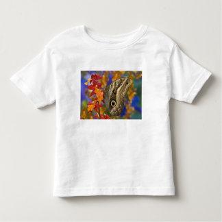 Sammamish, Washington. Tropical Butterflies 35 Toddler T-Shirt