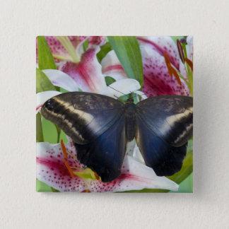 Sammamish, Washington. Tropical Butterflies 36 15 Cm Square Badge