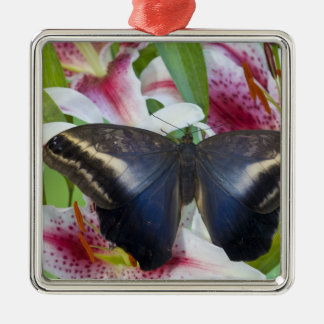 Sammamish, Washington. Tropical Butterflies 36 Christmas Ornament
