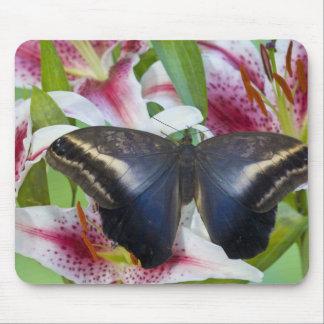 Sammamish, Washington. Tropical Butterflies 36 Mouse Mat