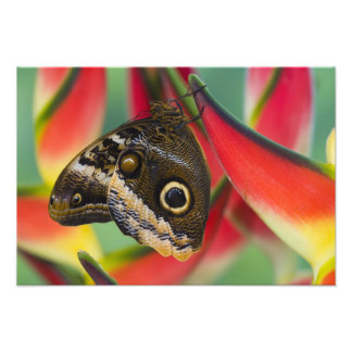 Sammamish, Washington. Tropical Butterflies 36 Photo Print