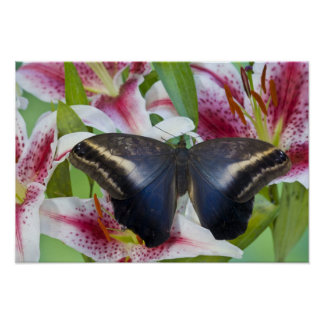 Sammamish, Washington. Tropical Butterflies 36 Poster