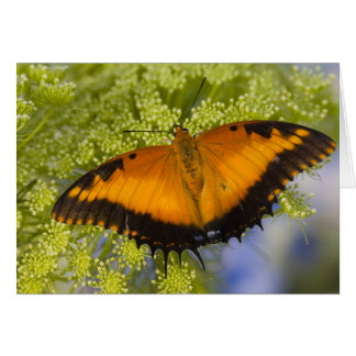 Sammamish, Washington. Tropical Butterflies 37 Card