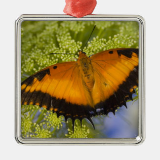 Sammamish, Washington. Tropical Butterflies 37 Christmas Ornament