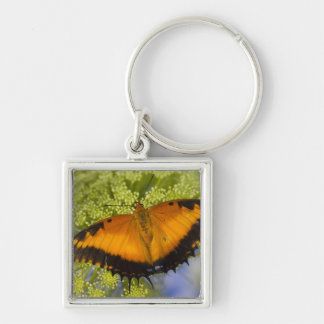 Sammamish, Washington. Tropical Butterflies 37 Key Ring