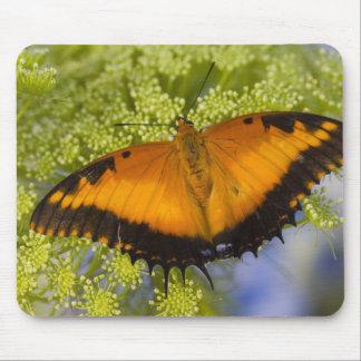 Sammamish, Washington. Tropical Butterflies 37 Mouse Mat