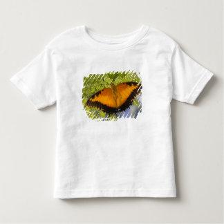 Sammamish, Washington. Tropical Butterflies 37 Toddler T-Shirt