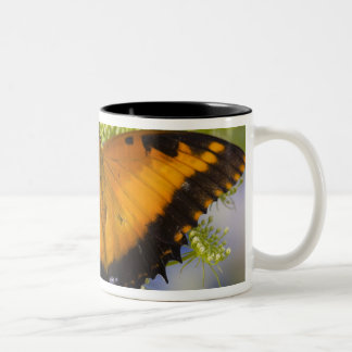 Sammamish, Washington. Tropical Butterflies 37 Two-Tone Coffee Mug