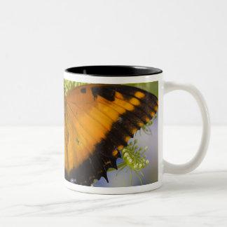 Sammamish, Washington. Tropical Butterflies 37 Two-Tone Coffee Mug