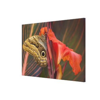 Sammamish, Washington. Tropical Butterflies 38 Canvas Print
