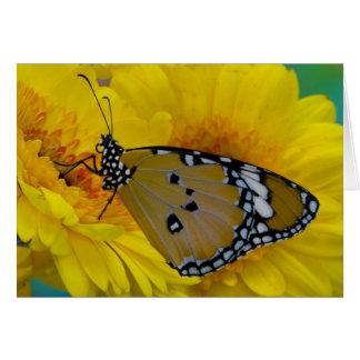 Sammamish, Washington. Tropical Butterflies 38 Card