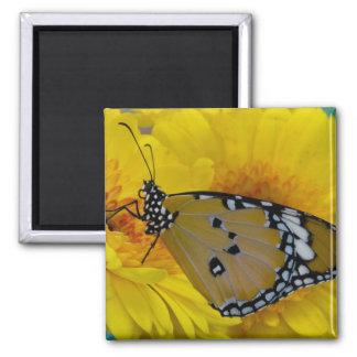 Sammamish, Washington. Tropical Butterflies 38 Magnet