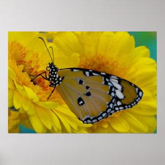 Sammamish, Washington. Tropical Butterflies 38 Poster