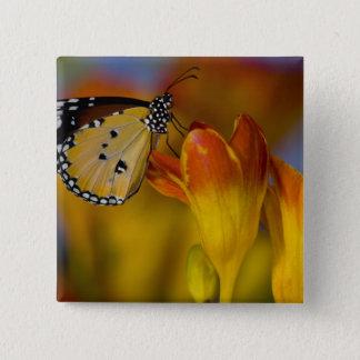 Sammamish, Washington. Tropical Butterflies 39 15 Cm Square Badge