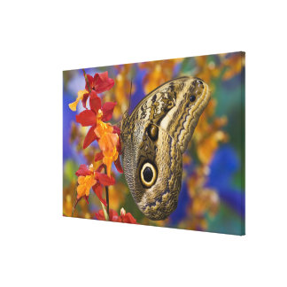 Sammamish, Washington. Tropical Butterflies 39 Canvas Print