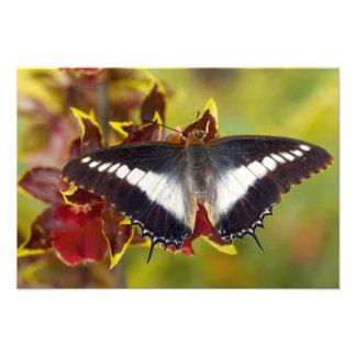 Sammamish, Washington. Tropical Butterflies 39 Photo Print