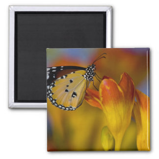Sammamish, Washington. Tropical Butterflies 39 Square Magnet