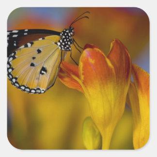 Sammamish, Washington. Tropical Butterflies 39 Square Sticker