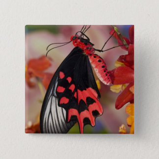 Sammamish, Washington. Tropical Butterflies 3 15 Cm Square Badge
