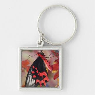 Sammamish, Washington. Tropical Butterflies 3 Key Ring