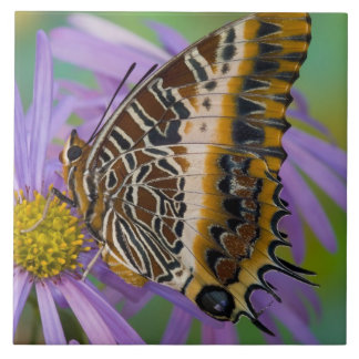 Sammamish Washington Tropical Butterflies 3 Large Square Tile